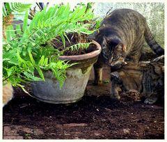 Drei Gartenbauingenieure