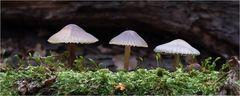 Drei Höhlenbewohner ...