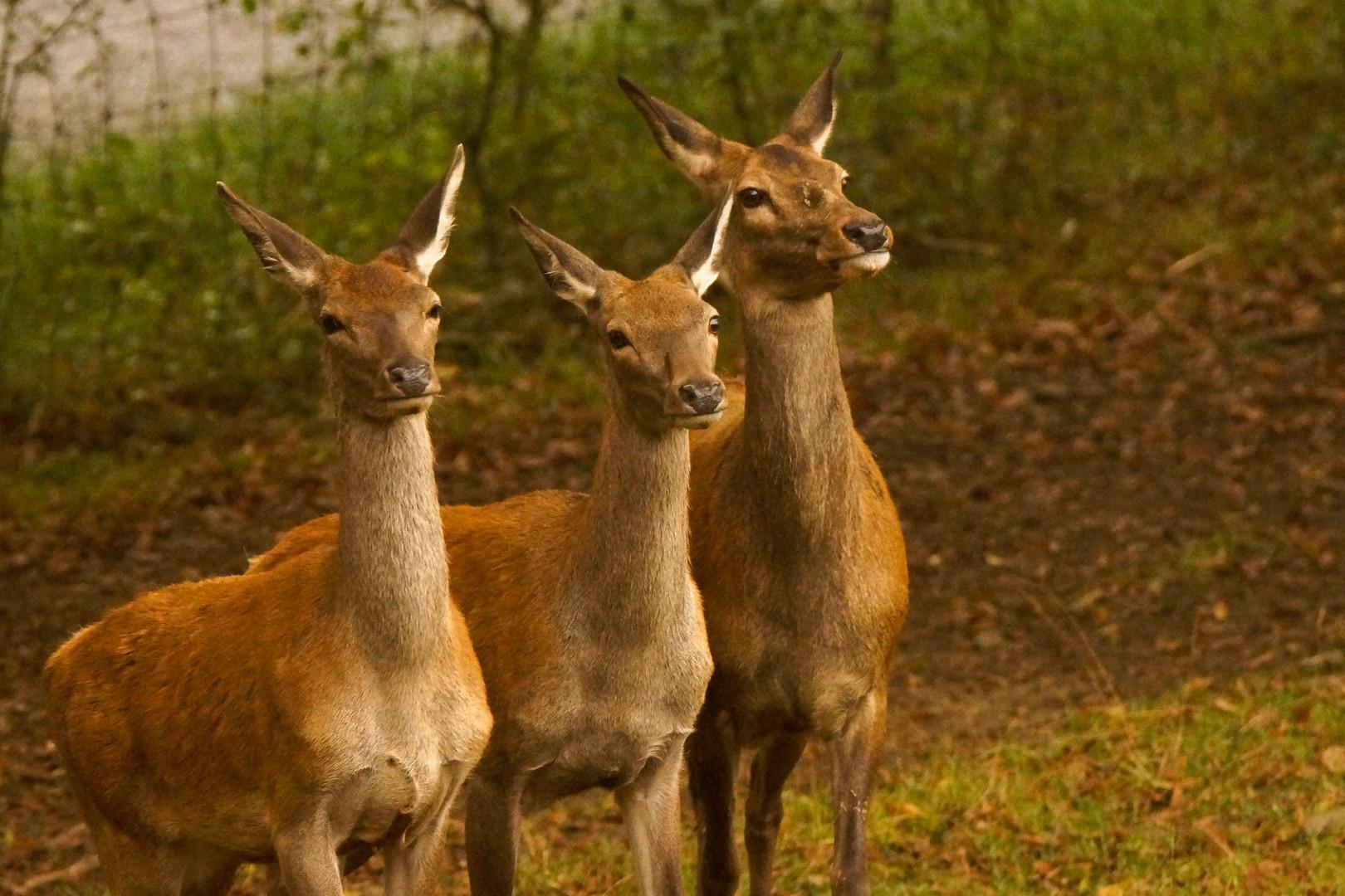 drei hübsche Mädels Foto & Bild | tiere, park, wald Bilder