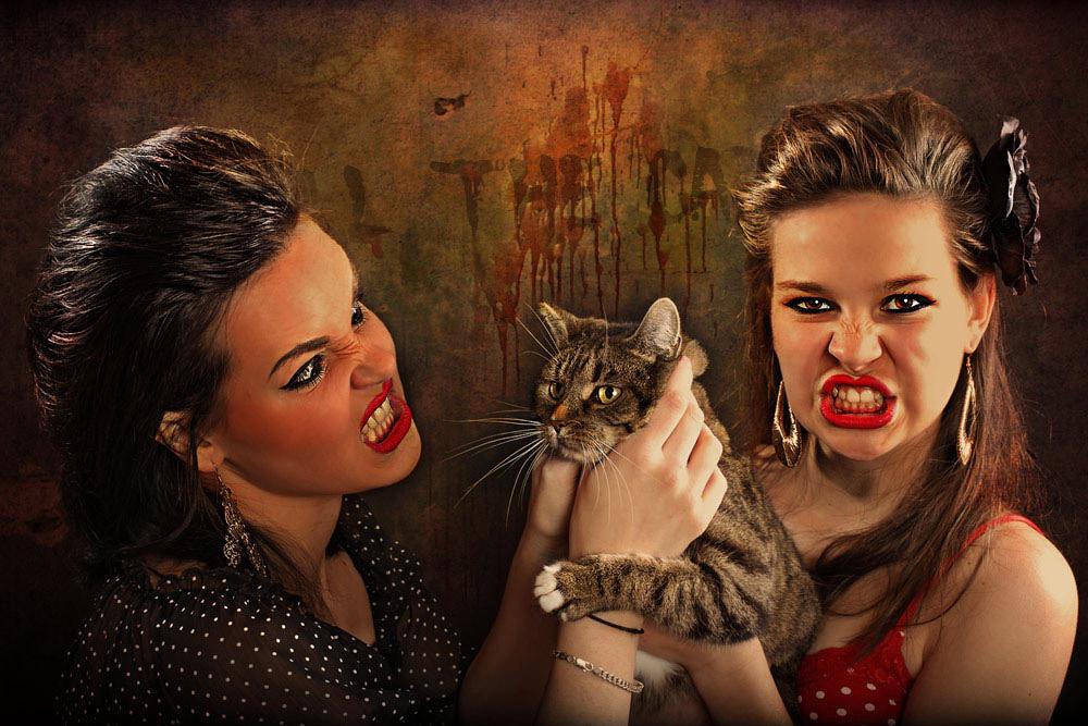 Drei Kätzchen...