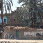 drei Maenner Esel Egypt