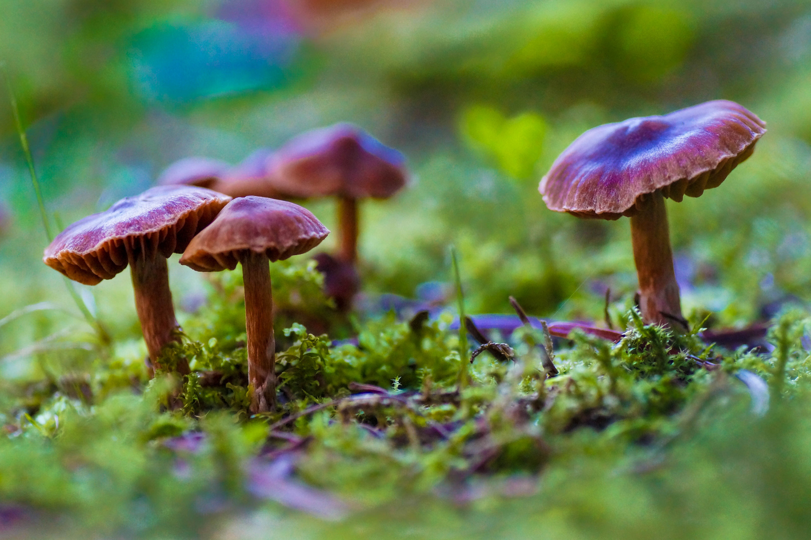 Drei Männlein stehn im Walde......