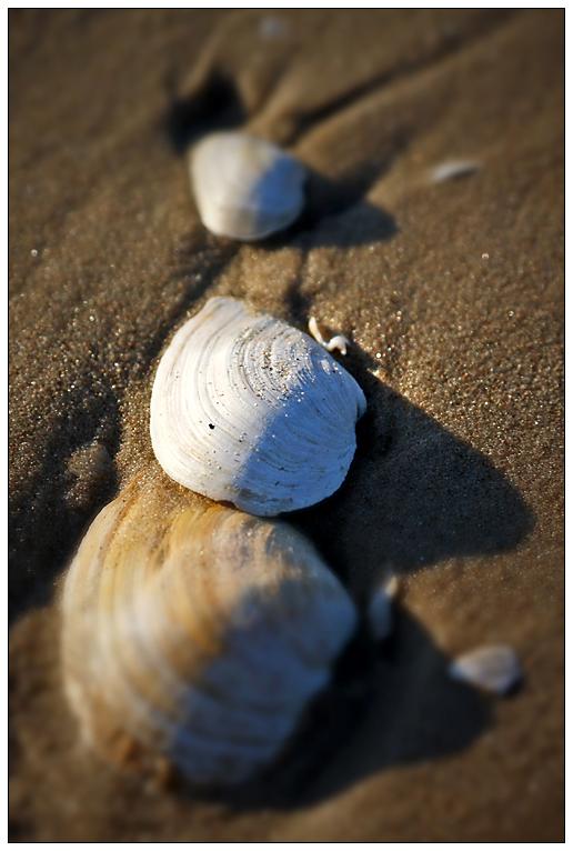 Drei Muscheln am Strand...