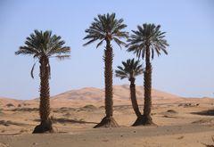 Drei Palmen...