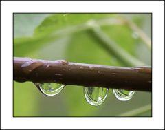 Drei Regentropfen