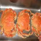 Drei Taschenkrebse (Dungeoness Crab)