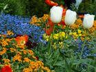 Drei Wächter der Blumenwiese