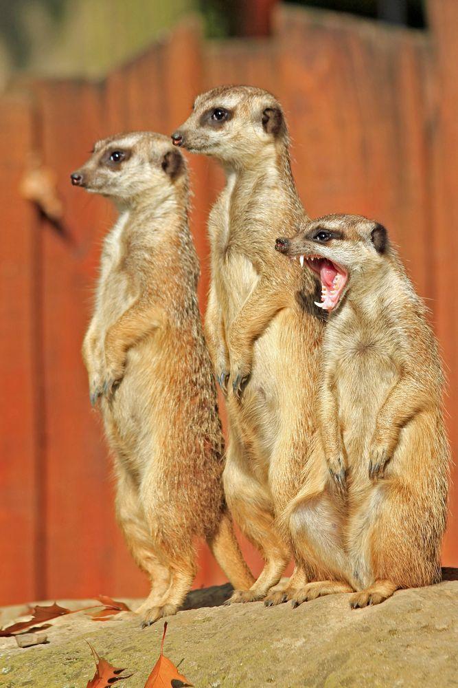 Drei Wächter