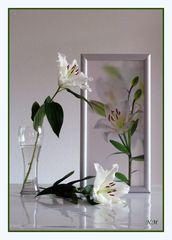 Drei weiße Lilien