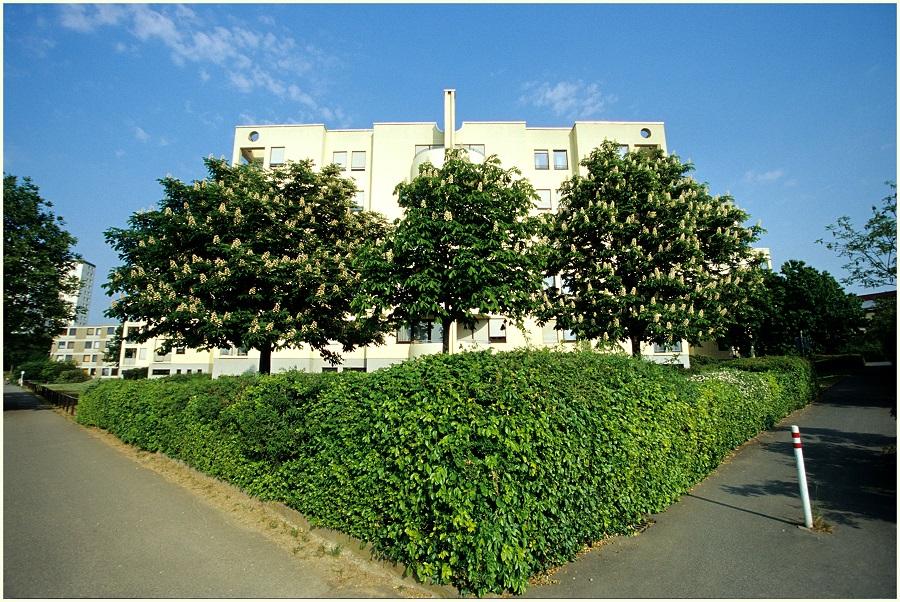 Dreibaumhaus