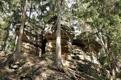 Dreiköpfige versteinerte Echse im Waldgefängnis