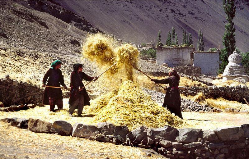 Dreschplatz / Ladakh