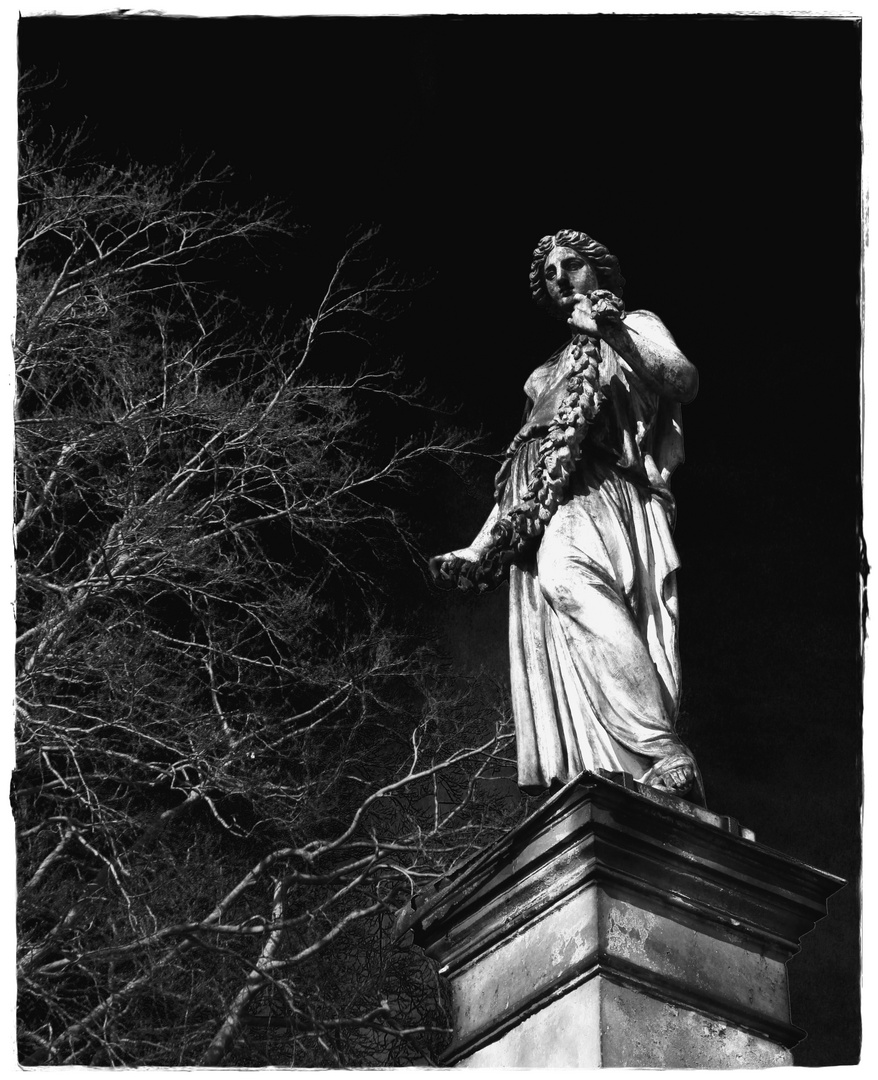 Dresdener Frauen....