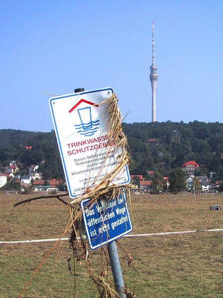 Dresdner Elbwiesen-Blick von Laubegast auf Wachwitz