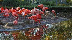 Dresdner Flamingos in einem Ausschnitt größer gezeigt...