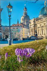 Dresdner Frühling!