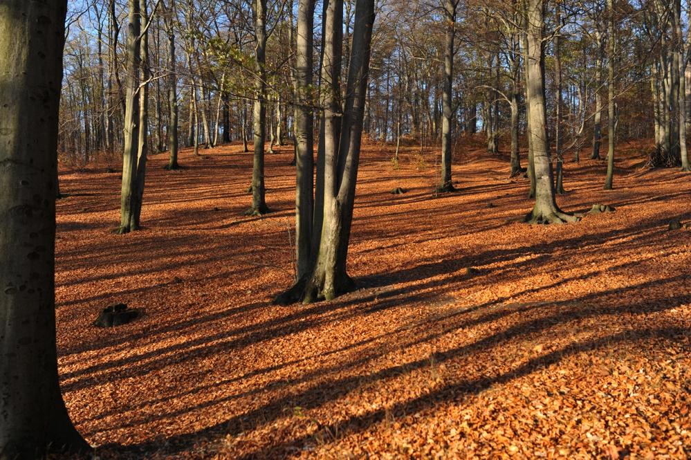 Dresdner Heide | Goldener Herbst