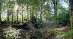 Dreslers Park in Kreuztal (5): Brücke im Wald
