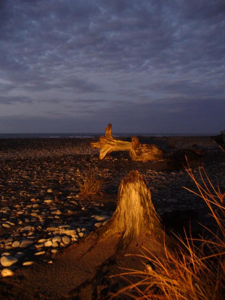driftwood at Gillespie's beach