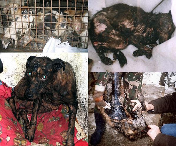 Hunde Aus Rumänien Probleme