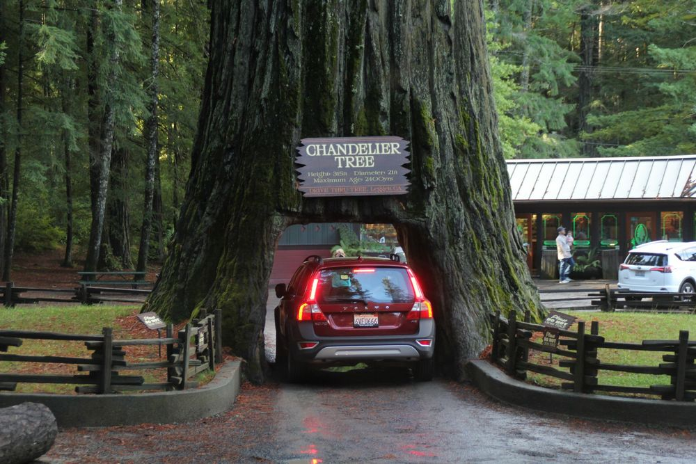 Drive Thru Tree...
