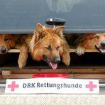 DRK Rettungshunde