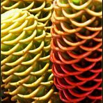 Drôles de fleurs….?, vues au marché central de Nouméa