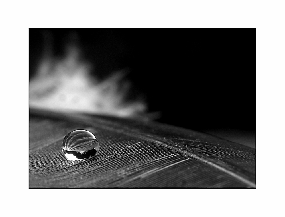 Drop on Feather