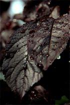 droplet formation