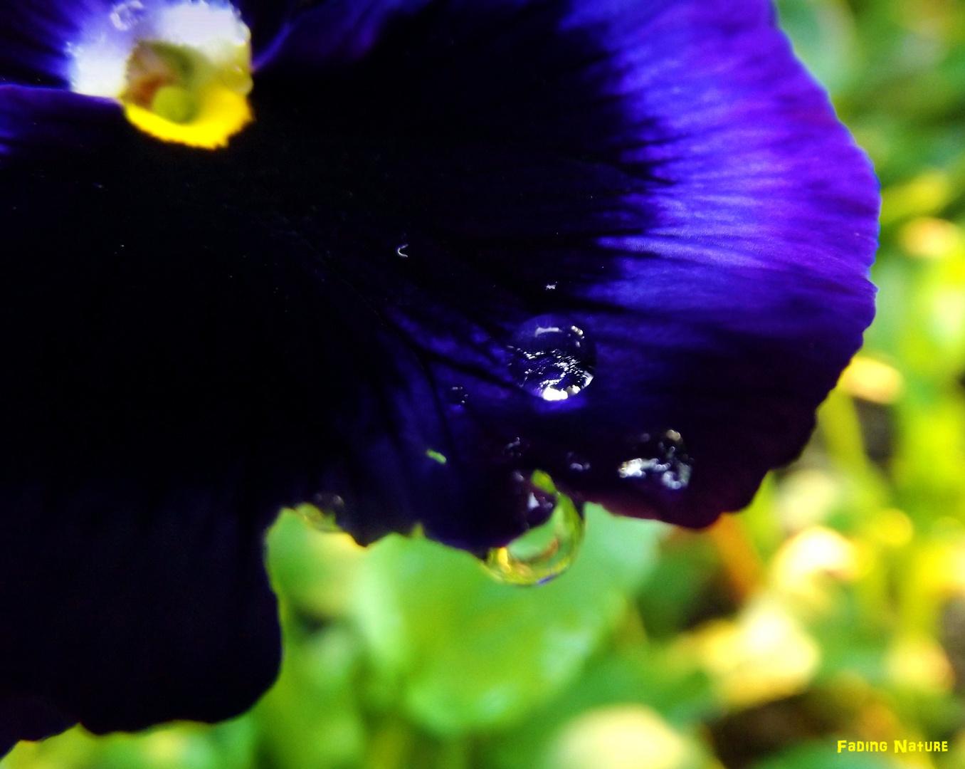 - drops -