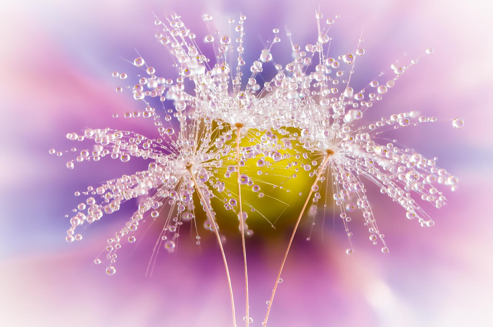 Drops e Flowers Gocce e Fiori Riflessi by Mario JR Nicorelli con Nikon D300s macro fotografia