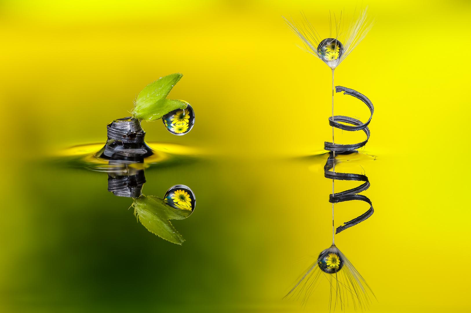 Drops & Flowers gocce e riflessi by Mario Nicorelli con Nikon D300s macro fotografia