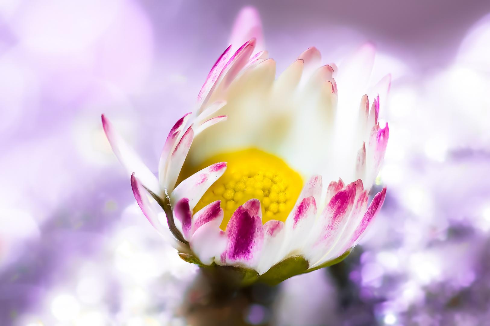 Drops Flowers Gocce Fiori Riflessi Mario jr Nicorelli macro fotografia Macro Photography