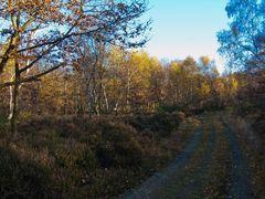 Drover Heide 2