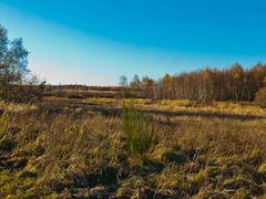 Drover Heide 5