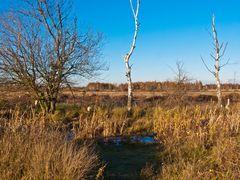 Drover Heide 6