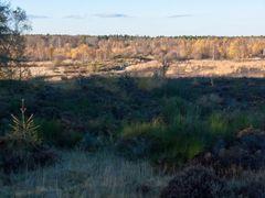 Drover Heide 7