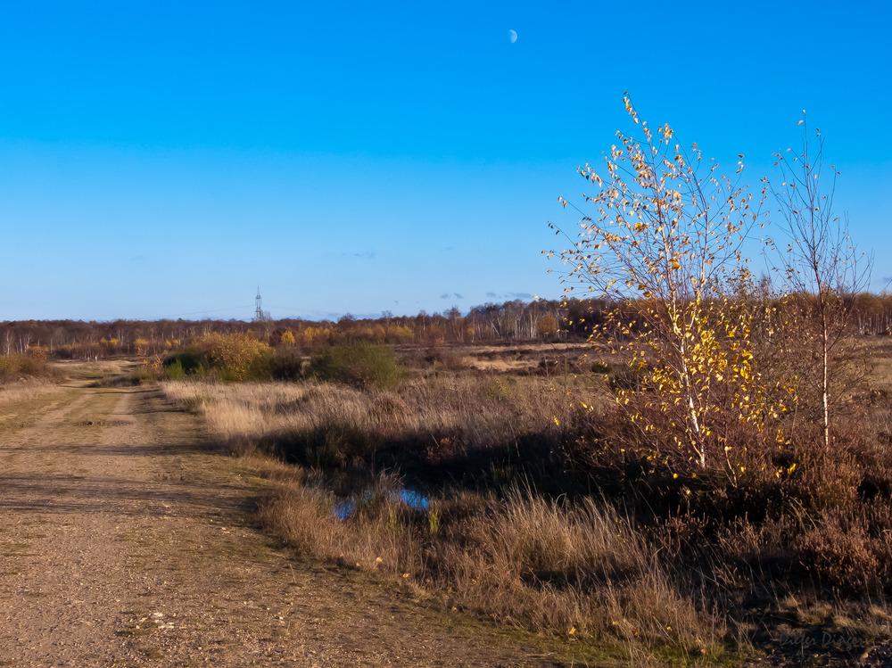 Drover Heide 8