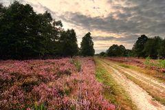 Drover Heide (I)
