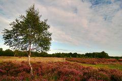 Drover Heide (III)