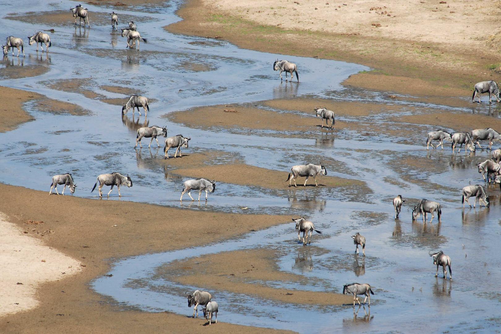 Dry season around Tarangire river
