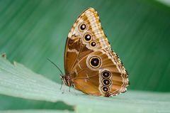 DSC_2653a Schmetterlingsbearbeitung