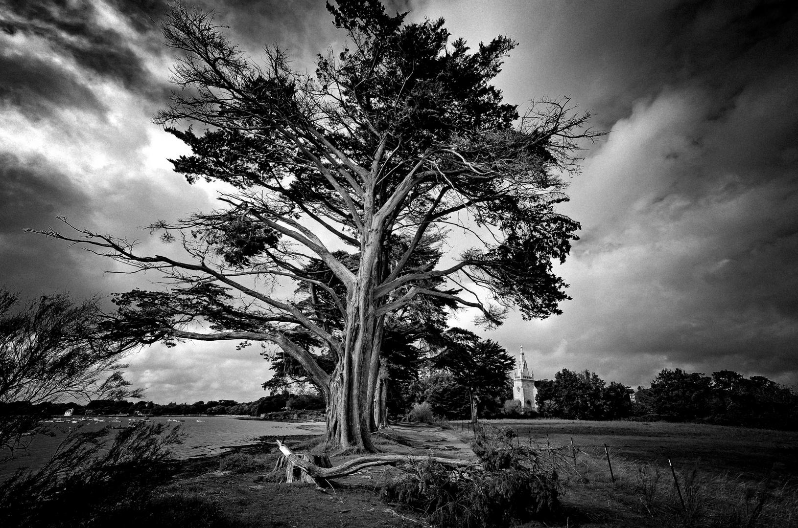 _DSC4325- L'arbre menacé