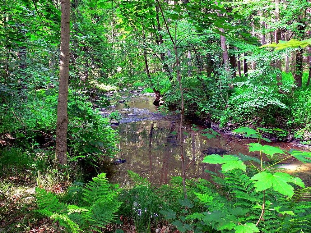 Dschungel am Bach