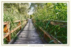 Dschungel Brücke