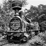 Dschungel Express 55 5708