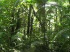 Dschungel-Wanderung auf Pulau Tioman