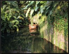 ...DschungelFeeling...