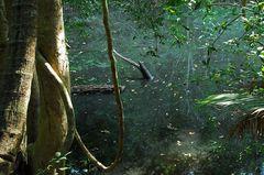 Dschungelfluss