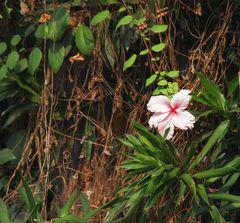 """Dschungelpflanze in """"Gondwana"""""""